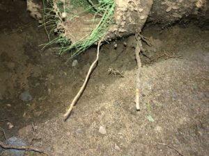 Biomasse Bactérie de champ épuration