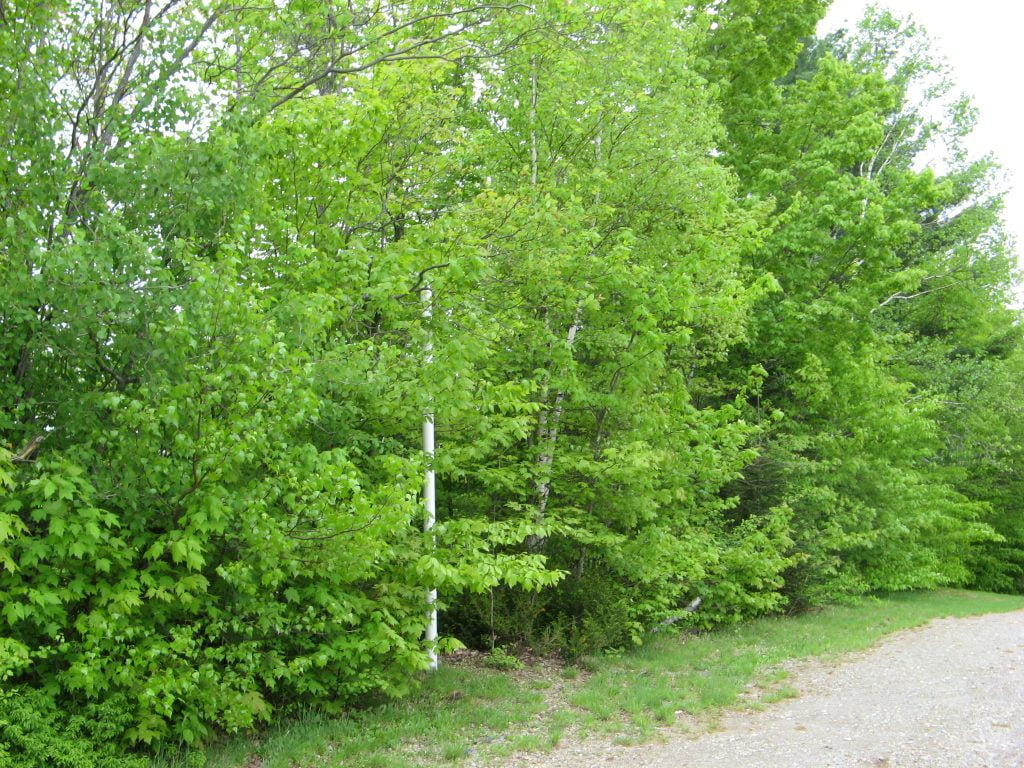 Septic system for a lakeside campground in Quebec - Case Study 3